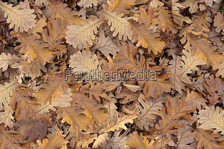 pile of fallen autumn leaves on