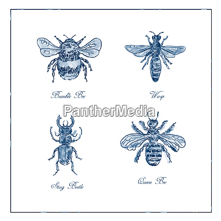 bumble bee wasp stag beetle and