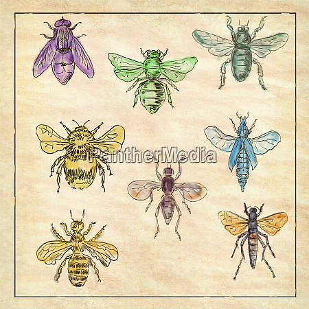 vintage bees and flies collection on