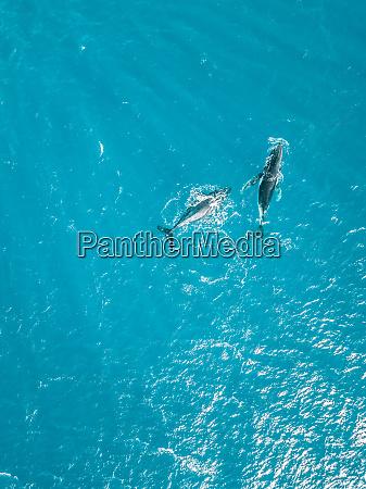 vista aerea di due balene che