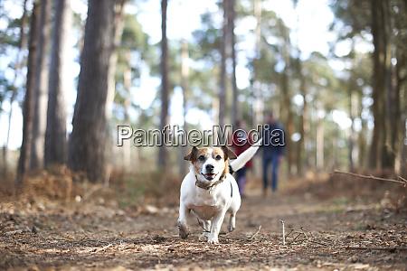 cane, felice, e, spensierato, che, corre - 27457316