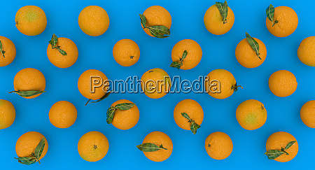 series of oranges on a blue