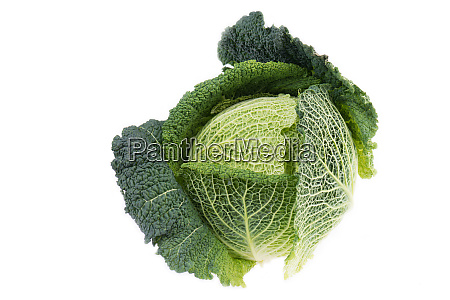fresh green savoy cabbage