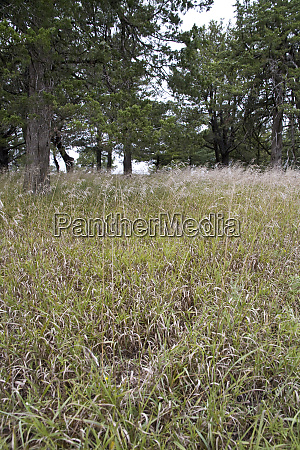 united states kansas prairie grasses are