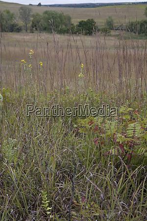 united states kansas the prairie grasses
