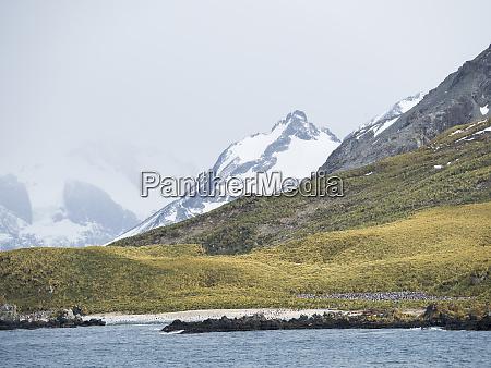 chinstrap, penguin, (pygoscelis, antarctica), vicino, alla, baia - 27732722