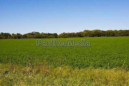 usa kansas minneapolis soybean field