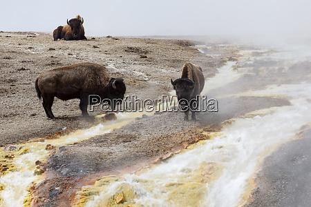 usa wyoming yellowstone national park midway
