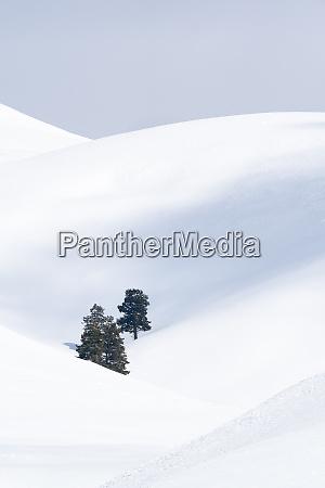 usa wyoming yellowstone national park lamar