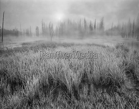 usa wyoming yellowstone cold foggy morning