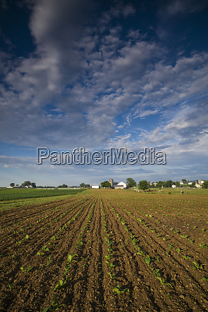 usa, , pennsylvania, , strasburg., farm - 27817129