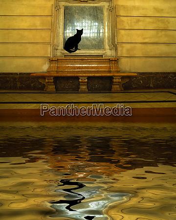concetto di gatto nero e acqua