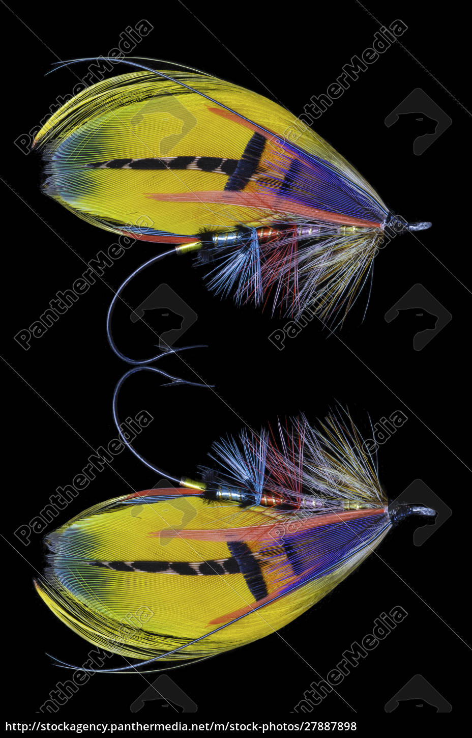 atlantic, salmon, fly, disegna,