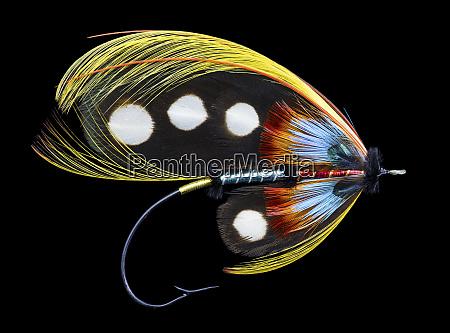 atlantic, salmon, fly, disegna,