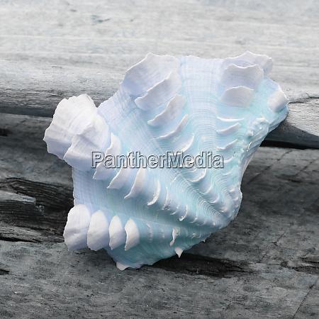 natutical shell natura morta