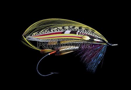 disegni, di, atlantic, salmon, fly - 27888030