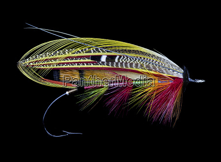 disegni, di, atlantic, salmon, fly - 27888049