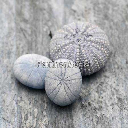 natutical, shell, natura, morta. - 27888326