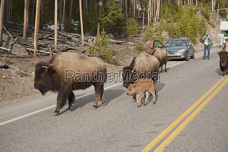 parco nazionale di yellowstone wyoming stati