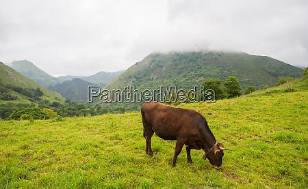 farm, cows - 28009087