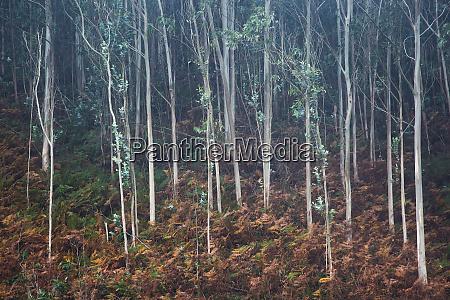 foglie che crescono sugli alberi di