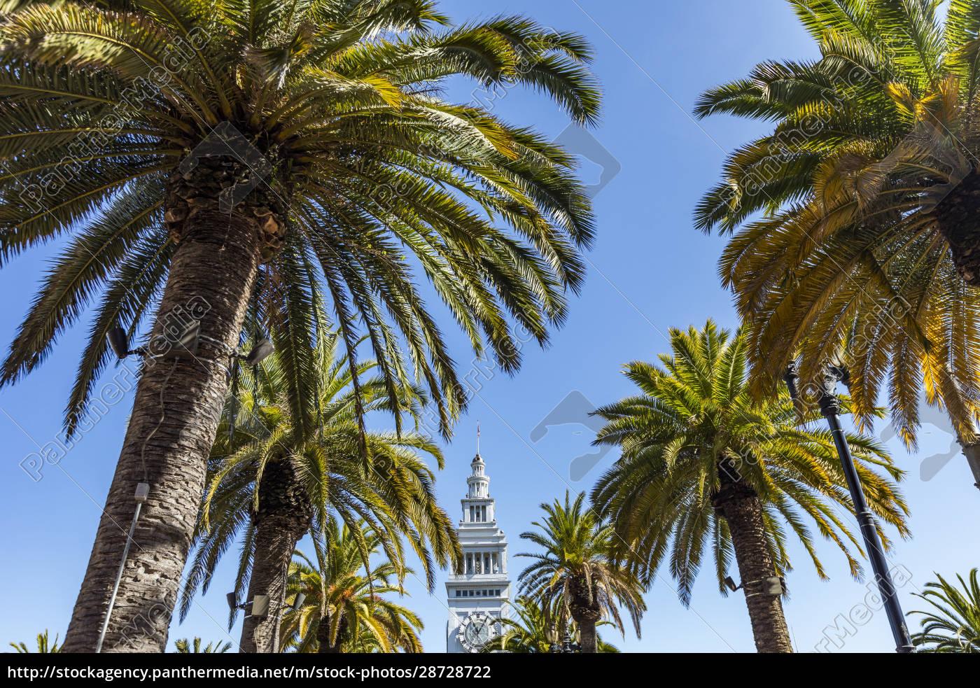 stati, uniti, california, san, francisco, palme, e, cima, della - 28728722