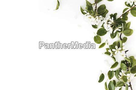 ID immagine 28981259
