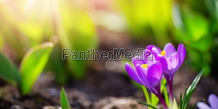 vista panoramica sui fiori primaverili nel