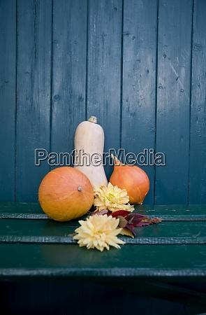 decorazione autunnale dahlia e zucche ornamentali