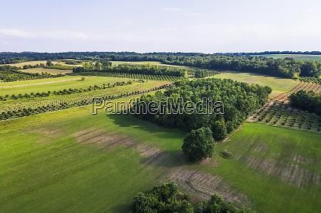 vista drone del paesaggio verde della