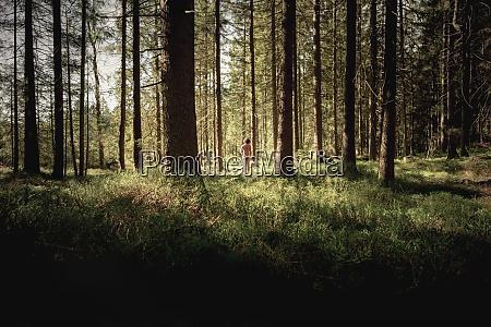 ID immagine 29123552