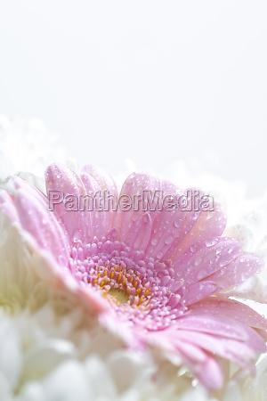 natura morta di fiori su sfondo