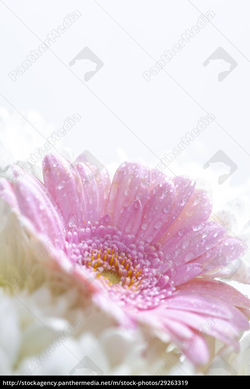 still, life, of, flowers, on, white - 29263319
