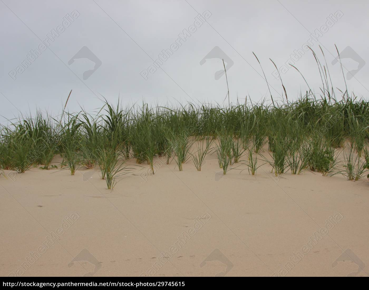 top, of, sand, dune, with, wild - 29745615