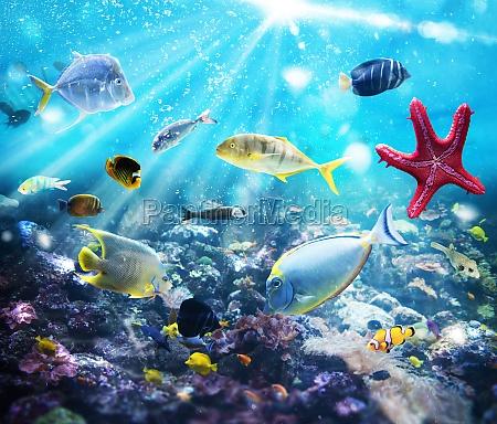 vita, marina - 29839187