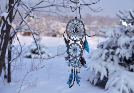 blu sfondo cerchio decorazione naturale albero