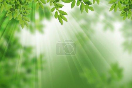 ID immagine B12055518