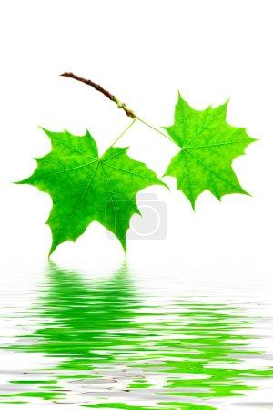 verde, Colore, bianco, Contesto, Vibrante, Isolato - B5079346